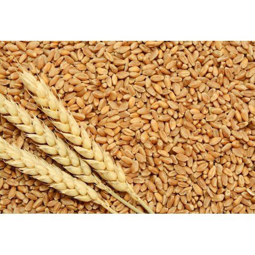 Import High Protein Premium Grade Soft Milling Wheat Grain from South Africa