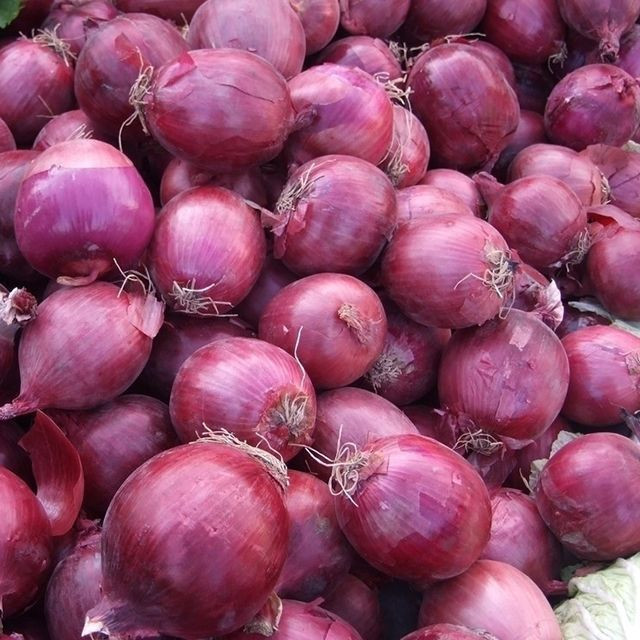 Fresh Onion Red onion / Gold onion , High quality best price