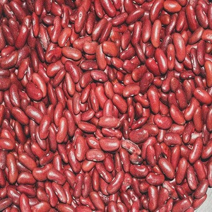 Bulk Organic Dark Red Kidney Beans For Canned Foods Bulk Organic Dark Red Kidney Beans For Canned Foods Suppliers Manufacturers Tradewheel