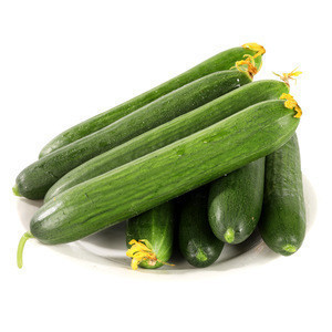 Wholesale China Grown Cucumber Green Fresh