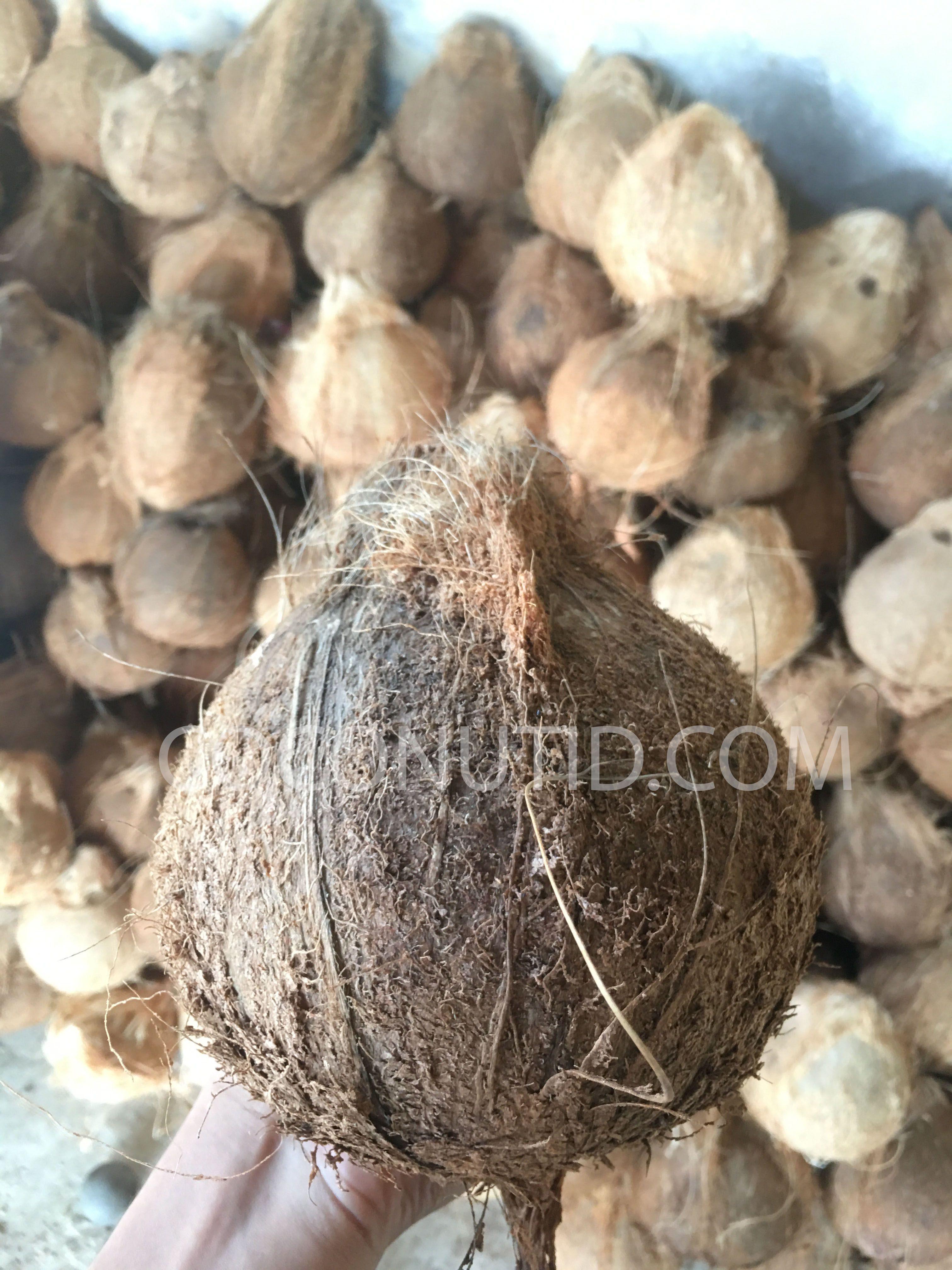 Coconut Semi husked Premium Quality