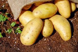 We offer fresh potato