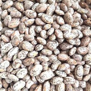 Light speckled kidney bean LSKB Pinto bean butter bean size 200-220pcs new crop