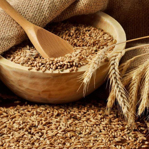 New Crop Soft Wheat, Barley Grains for Consumption