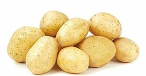 New harvest Fresh Potatoes/Fresh long shape new potato