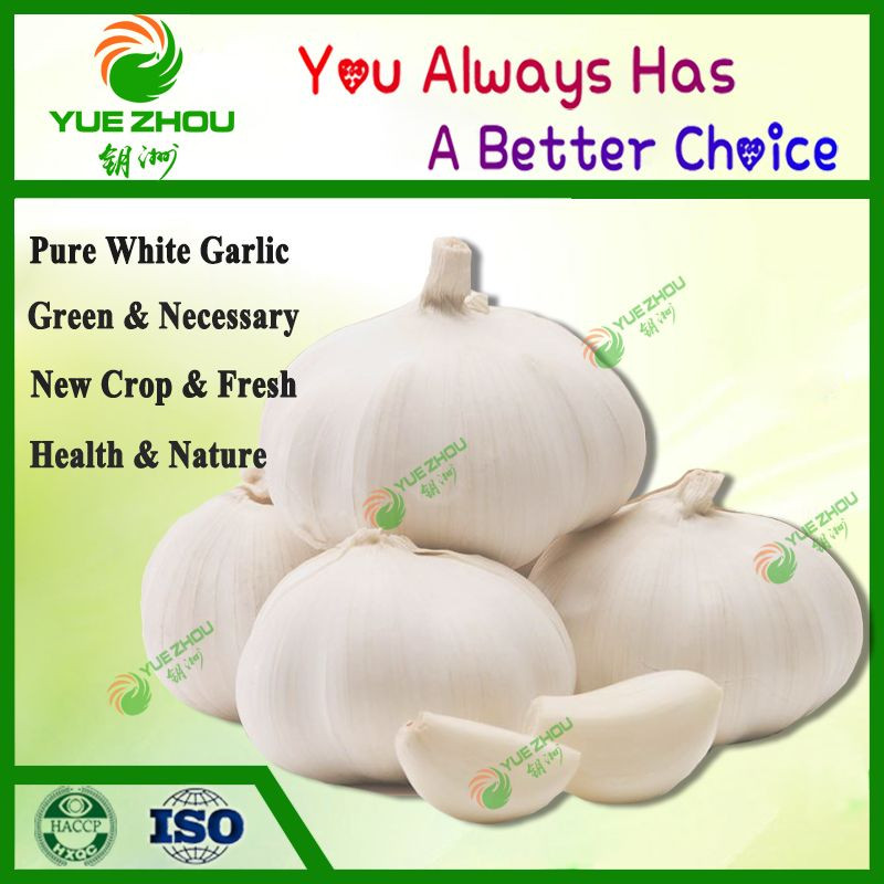 2020 New Crop Fresh Garlic From China