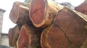 Hard Wood Timber for sale