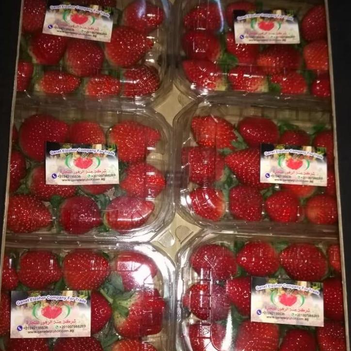Egyptian Fresh Strwaberry
