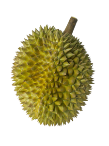 Frozen Whole D101 Durian in Malaysia