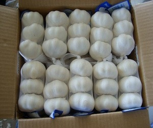 New Crop High Quality Fresh Normal White Garlic Purple Garlic Red Garlic