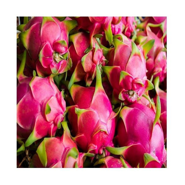 High quality Fresh / Dried Dragon Fruit Cheap Price Red / White Dragon Fruits Wholesale made in Vietnam