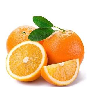 Buy Online Golden Kinnow Malta Mosambi Orange