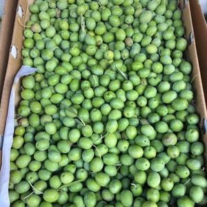 European best grade Fresh Olives for sale
