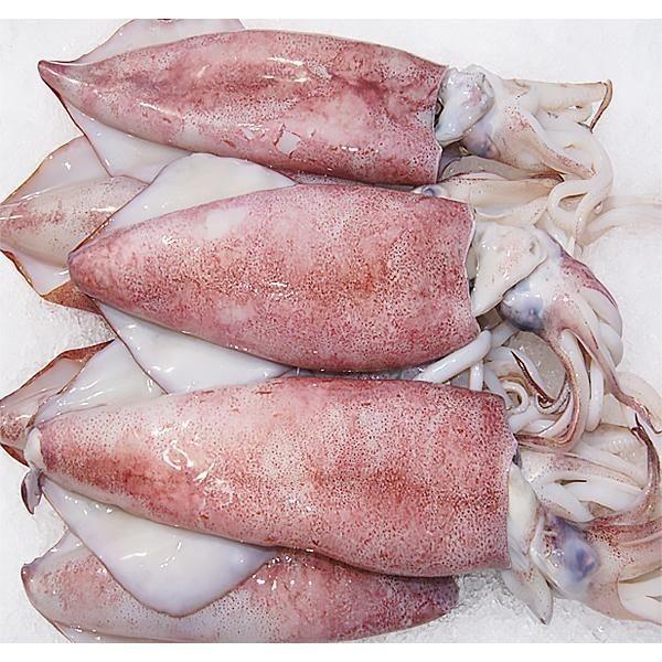 Frozen Natural Fresh Squid with CE, FDA Certificate for EU, Korea, Singapore Market - Nutritious Flower / Whole Squid