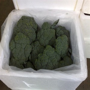 Broccoli for sale