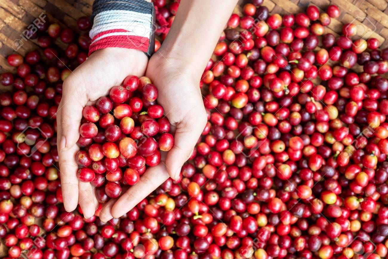 Green 100% Colombian Coffee Beans