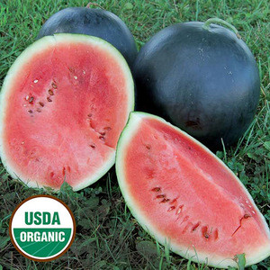 Watermelons For Sale/Organic Watermelon Melons price
