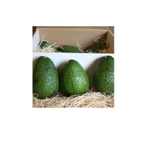 Fresh Avocado Hass & Fuerte From SOuth Africa