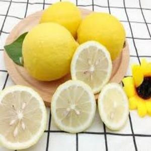 Fresh Eureka Lemons for sale
