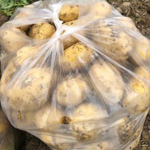 Fresh Potatoes - Variety: Marabel