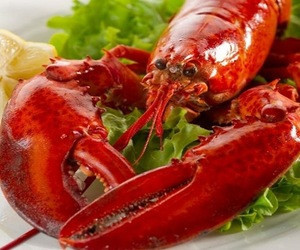 High Quality Frozen Lobster /Lobster/ Fresh Lobster