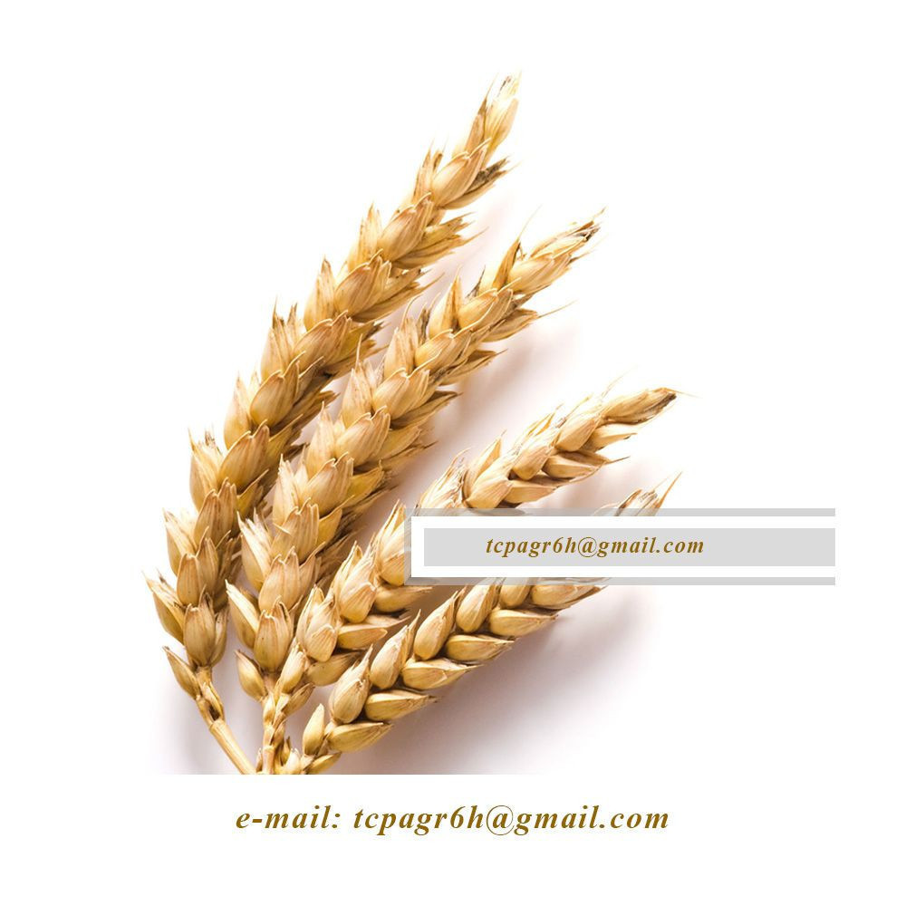 DURUM WHEAT from UKRAINE / PRICE 2020 /