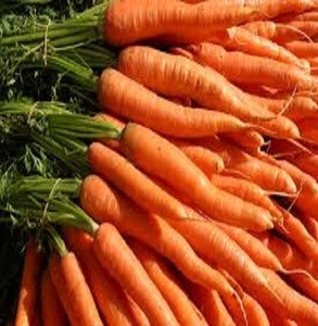 Fresh Carrots Best Price and Quality