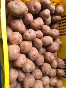 Light yellow fresh irish potatoes