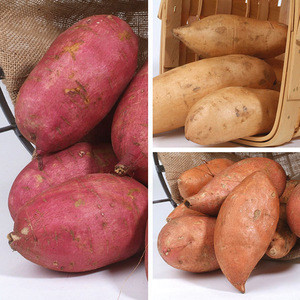 Red / Yellow / Purple Skin Sweet Potatoes