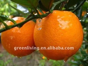 2014 fresh orange