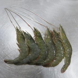2019 new season best price head on frozen vannamei shrimps