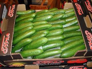 Fresh egyptian Cucumber high quality