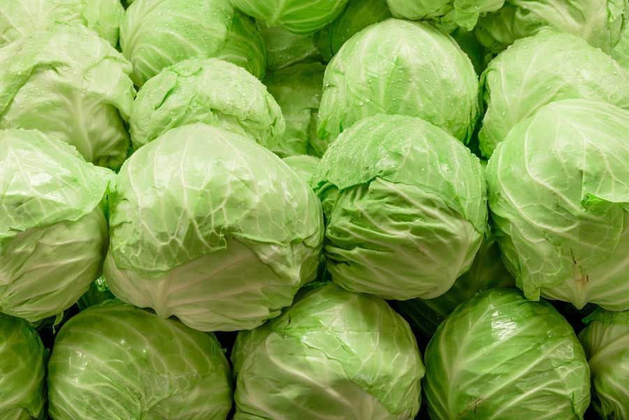 Hot Sale - Fresh Round Cabbage with CE, FDA, HACCP Certificate - High Quality Natural Cabbage for EU, Japan, Korea, USA