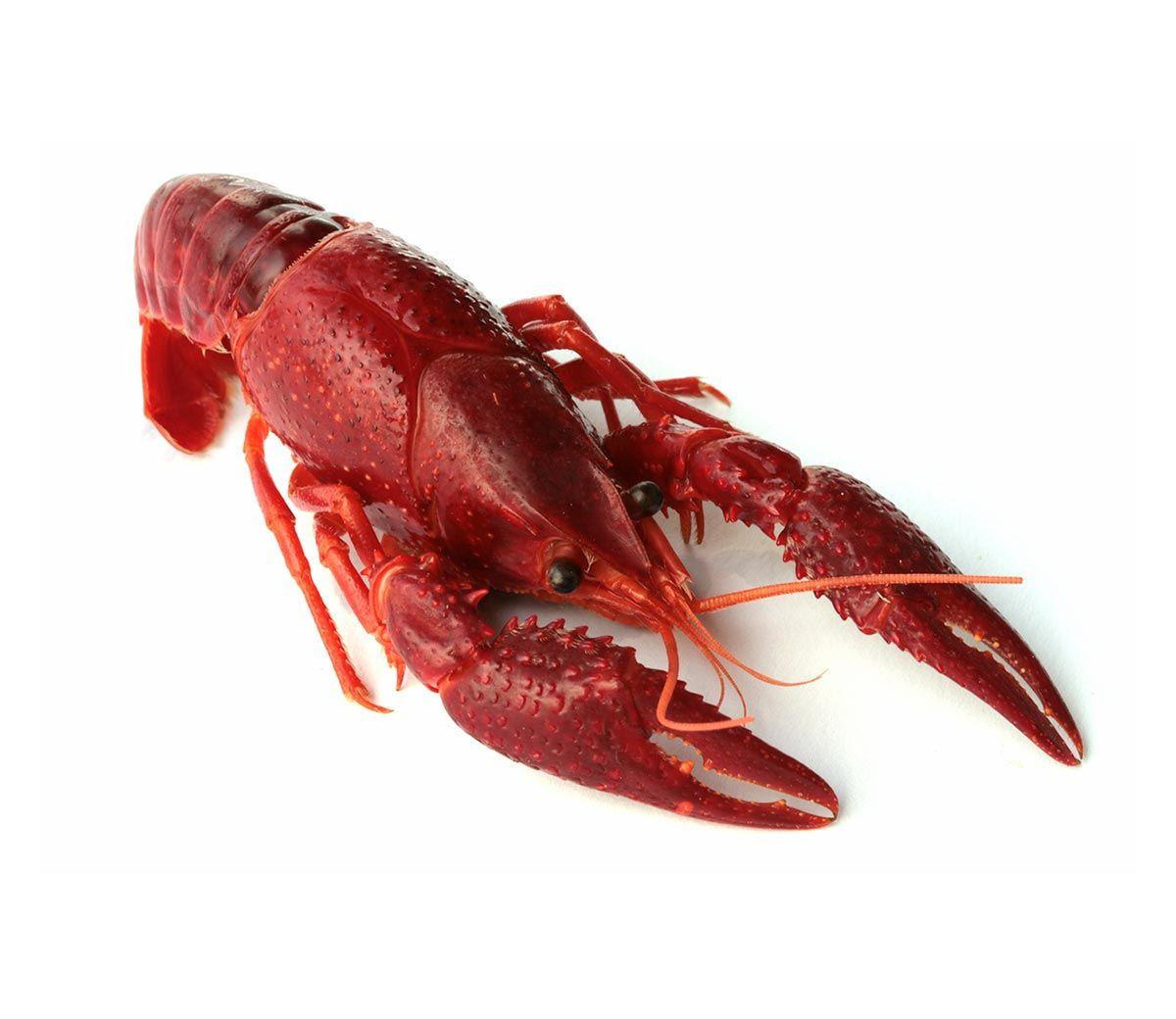 Whole Boiled Unseasoned Frozen Egyptian Wild Catch Crawfish