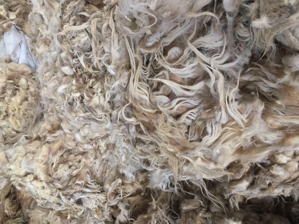 natural white color Sheep Wool/Greasy Sheep Wool