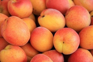 Best Quality Fresh Apricot