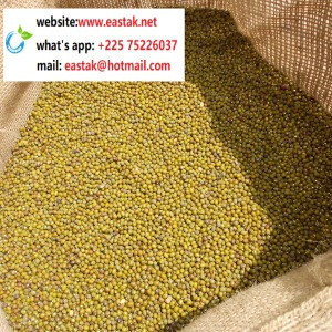 Low price Non-GMO green mung bean from Africa- whats app:+22575226037