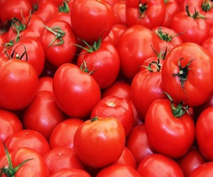 Red Color Fresh Tomato for sale