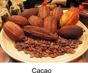 Dried Grade A Cocoa/ Cacao/ Chocolate bean