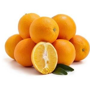Fresh Citrus Fruits, Juicy Oranges and Valencia Oranges High Quality