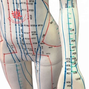 English code 48cm high female acupuncture human body model