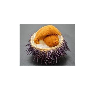 Frozen Sea Urchin For Export Best Price