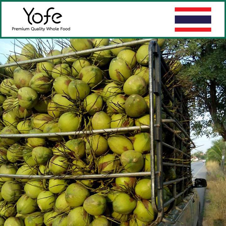 Thai Fresh Fragrant Coconut Export Good Price