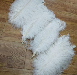 White Ostrich feathers Wholesale 15.7-17.7'' Non-toxic In Stock Certificated