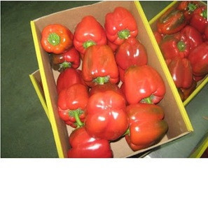Sweet pepper,,fresh cherry peppers,Fresh Capsicum