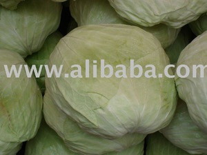 Fresh Cabbage/Celery Cabbage/Chinese Cabbage