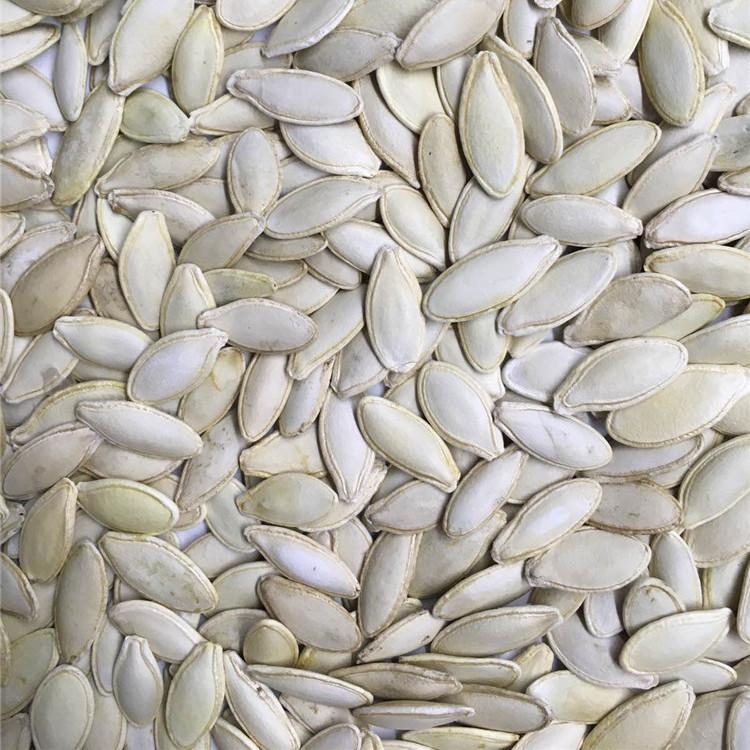 Grade AA. kernels shine skin europe organic lady nail pumpkin seeds  in shell