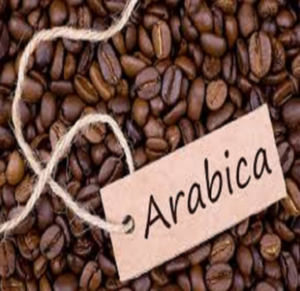 Promotion Cheap Ethiopian Yergacheffe Organic Coffee G2