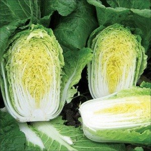 2020  South Africa Fresh Celery Cabbage ,Celery Cabbage