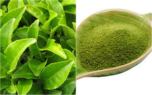 Organic Green Tea powder making from Quality Green tea leaves